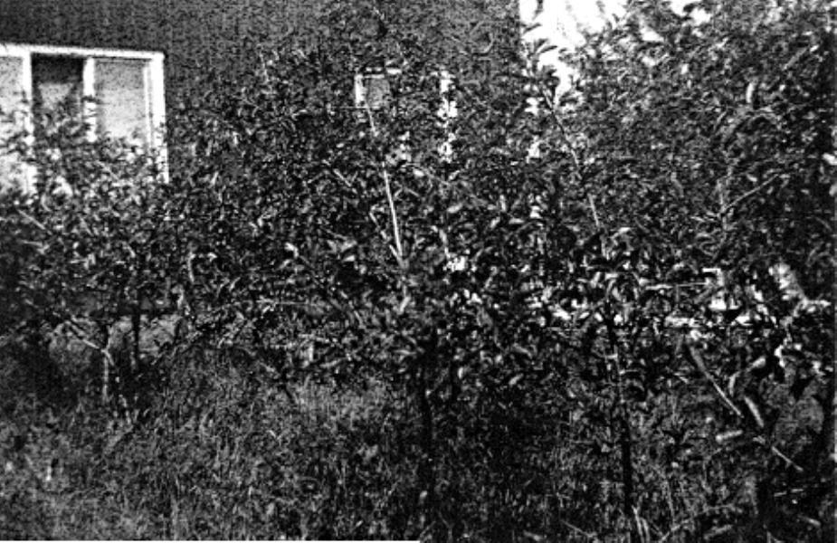 Bild 127 Österplana Skagen Solbacken