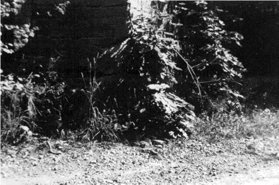 Bild 131 Hällekis Rödstensklev