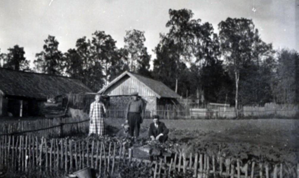 Bild 2343 Falkängen Hällekis