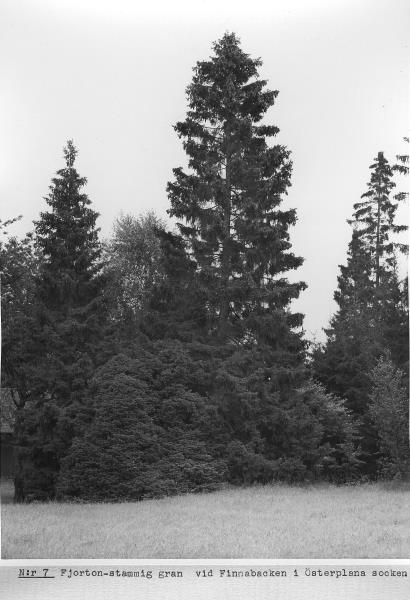 Bild3091 Artur Andersson Hällekis